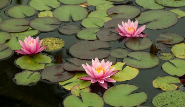 peaceful-pond